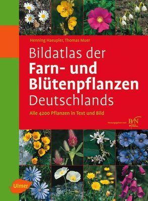 Bildatlas der Farn- und Blütenpflanzen Deutschlands von Haeupler,  Henning, Muer,  Thomas