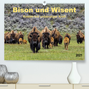 Bison und Wisent – Riesen mit unbändiger Kraft (Premium, hochwertiger DIN A2 Wandkalender 2021, Kunstdruck in Hochglanz) von Roder,  Peter