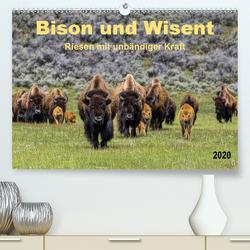 Bison und Wisent – Riesen mit unbändiger Kraft (Premium, hochwertiger DIN A2 Wandkalender 2020, Kunstdruck in Hochglanz) von Roder,  Peter