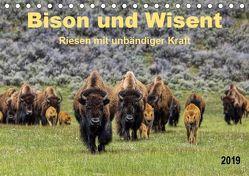 Bison und Wisent – Riesen mit unbändiger Kraft (Tischkalender 2019 DIN A5 quer) von Roder,  Peter