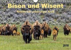 Bison und Wisent – Riesen mit unbändiger Kraft (Wandkalender 2018 DIN A4 quer) von Roder,  Peter