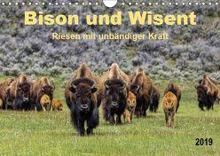 Bison und Wisent – Riesen mit unbändiger Kraft (Wandkalender 2019 DIN A4 quer) von Roder,  Peter