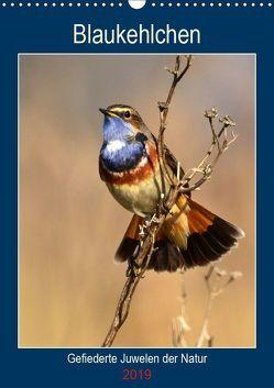 Blaukehlchen. Gefiederte Juwelen der Natur. (Wandkalender 2019 DIN A3 hoch) von Schaack,  René