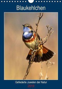 Blaukehlchen. Gefiederte Juwelen der Natur. (Wandkalender 2019 DIN A4 hoch) von Schaack,  René