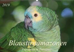 Blaustirnamazonen – Papageien in Paraguay (Wandkalender 2019 DIN A2 quer) von Schneider,  Bettina