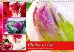 Blüten in Eis (Wandkalender 2019 DIN A4 quer) von Heiligenstein,  Marc