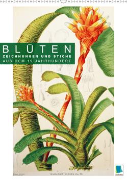 Blüten: Zeichnungen und Stiche aus dem 19. Jahrhundert (Premium, hochwertiger DIN A2 Wandkalender 2020, Kunstdruck in Hochglanz) von CALVENDO
