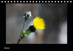 Blumen (Tischkalender 2020 DIN A5 quer) von deinhardt,  toby