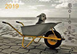 Bolonka 2019 (Tischkalender 2019 DIN A5 quer) von Winnen,  C.