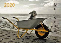 Bolonka 2020 (Wandkalender 2020 DIN A3 quer) von Winnen,  C.