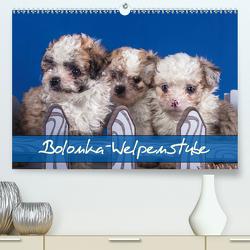 Bolonka Welpenstube (Premium, hochwertiger DIN A2 Wandkalender 2020, Kunstdruck in Hochglanz) von Wejat-Zaretzke,  Gabriela