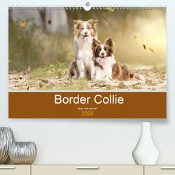 Border Collie – Bunt und clever! (Premium, hochwertiger DIN A2 Wandkalender 2020, Kunstdruck in Hochglanz) von Mayer Tierfotografie,  Andrea