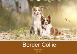 Border Collie – Bunt und clever! (Wandkalender 2020 DIN A2 quer) von Mayer Tierfotografie,  Andrea