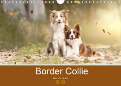 Border Collie – Bunt und clever! (Wandkalender 2020 DIN A4 quer) von Mayer Tierfotografie,  Andrea