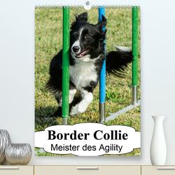 Border Collie Meister des Agility (Premium, hochwertiger DIN A2 Wandkalender 2021, Kunstdruck in Hochglanz) von homwico