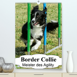Border Collie Meister des Agility (Premium, hochwertiger DIN A2 Wandkalender 2020, Kunstdruck in Hochglanz) von homwico