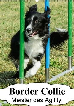 Border Collie Meister des Agility (Wandkalender 2018 DIN A2 hoch) von homwico,  k.A.