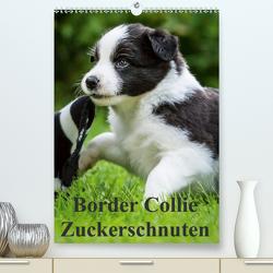 Border Collie Zuckerschnuten (Premium, hochwertiger DIN A2 Wandkalender 2020, Kunstdruck in Hochglanz) von Mayer,  Andrea