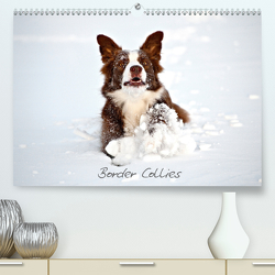 Border Collies (Premium, hochwertiger DIN A2 Wandkalender 2020, Kunstdruck in Hochglanz) von Greiling,  Hermann