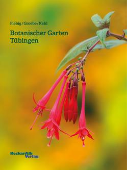 Botanischer Garten Tübingen von Fiebig,  Brigitte, Groebe,  Gerhard, Kehl,  Alexandra