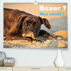 Boxer ? Was sonst ! (Premium, hochwertiger DIN A2 Wandkalender 2020, Kunstdruck in Hochglanz) von Janetzek,  Yvonne