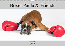 Boxerhündin Paula and Friends (Wandkalender 2019 DIN A3 quer) von Elbe,  Frank