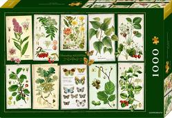 Boxpuzzle Sammlung Augustina (1000 Teile) von Behr,  Barbara