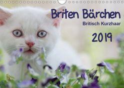 Briten Bärchen – Britsch Kurzhaar 2019 (Wandkalender 2019 DIN A4 quer) von Bollich,  Heidi