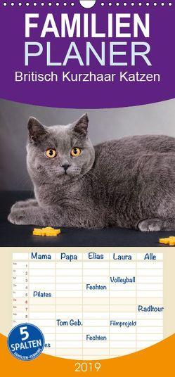 Britisch Kurzhaar Katzen – Familienplaner hoch (Wandkalender 2019 , 21 cm x 45 cm, hoch) von Wejat-Zaretzke,  Gabriela