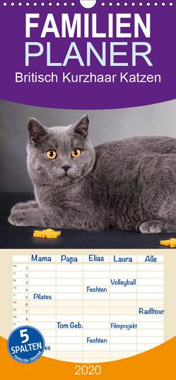 Britisch Kurzhaar Katzen – Familienplaner hoch (Wandkalender 2020 , 21 cm x 45 cm, hoch) von Wejat-Zaretzke,  Gabriela
