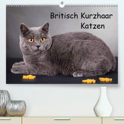 Britisch Kurzhaar Katzen (Premium, hochwertiger DIN A2 Wandkalender 2020, Kunstdruck in Hochglanz) von Wejat-Zaretzke,  Gabriela