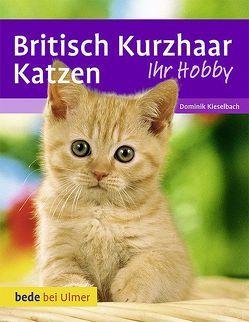 Britisch Kurzhaar Katzen von Betz,  Heidi, Kieselbach,  Dominik