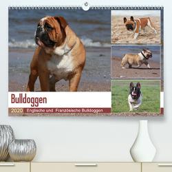 Bulldoggen – Englische und Französische Bulldoggen (Premium, hochwertiger DIN A2 Wandkalender 2020, Kunstdruck in Hochglanz) von Chawera