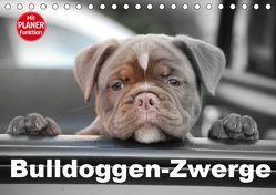 Bulldoggen-Zwerge (Tischkalender 2019 DIN A5 quer) von Stanzer,  Elisabeth