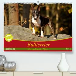Bullterrier, Powerpakete auf 4 Pfoten (Premium, hochwertiger DIN A2 Wandkalender 2021, Kunstdruck in Hochglanz) von Janetzek,  Yvonne