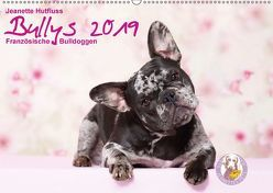 Bullys – Französische Bulldoggen 2019 (Wandkalender 2019 DIN A2 quer) von Hutfluss,  Jeanette