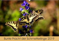 Bunte Pracht der Schmetterlinge (Wandkalender 2019 DIN A2 quer) von Blickwinkel,  Dany´s