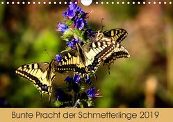 Bunte Pracht der Schmetterlinge (Wandkalender 2019 DIN A4 quer) von Blickwinkel,  Dany´s