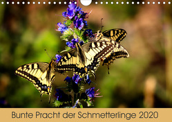 Bunte Pracht der Schmetterlinge (Wandkalender 2020 DIN A4 quer) von Blickwinkel,  Dany´s