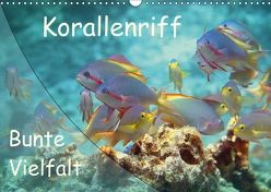 Bunte Vielfalt im Korallenriff (Wandkalender 2018 DIN A3 quer) von Niemann,  Ute