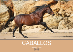 Caballos Spanische Pferde 2019 (Wandkalender 2019 DIN A2 quer) von Eckerl Tierfotografie,  Petra