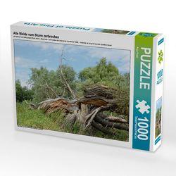 CALVENDO Puzzle Alte Weide vom Sturm zerbrochen 1000 Teile Lege-Größe 64 x 48 cm Foto-Puzzle Bild von Anja Frost