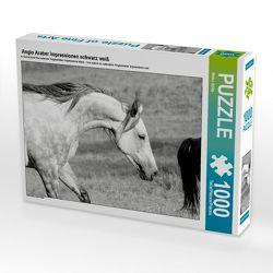 CALVENDO Puzzle Anglo Araber Impressionen schwarz weiß 1000 Teile Lege-Größe 64 x 48 cm Foto-Puzzle Bild von Meike Bölts