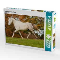 CALVENDO Puzzle Anmutiges Araber-Pferd 2000 Teile Lege-Größe 90 x 67 cm Foto-Puzzle Bild von Meike Bölts
