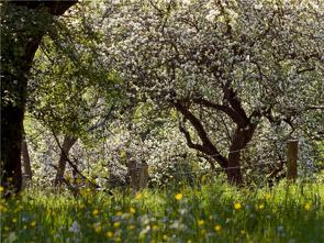 CALVENDO Puzzle Blühende Obstbäume und bunte Wiesen 2000 Teile Lege-Größe 90 x 67 cm Foto-Puzzle Bild von E. Ehmke ….international ausgezeichneter Fotograf…