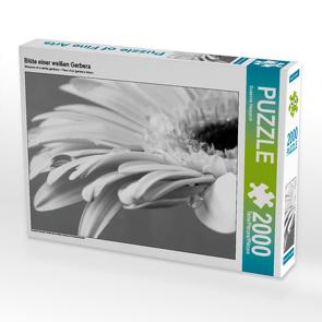 CALVENDO Puzzle Blüte einer weißen Gerbera 2000 Teile Lege-Größe 90 x 67 cm Foto-Puzzle Bild von Susanne Herppich