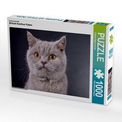 CALVENDO Puzzle Britisch Kurzhaar Katzen 1000 Teile Lege-Größe 64 x 48 cm Foto-Puzzle Bild von Gabriela Wejat-Zaretzke von Wejat-Zaretzke,  Gabriela