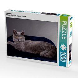 CALVENDO Puzzle Britisch Kurzhaar Katzen – Planer 1000 Teile Lege-Größe 64 x 48 cm Foto-Puzzle Bild von Gabriela Wejat-Zaretzke von Wejat-Zaretzke,  Gabriela