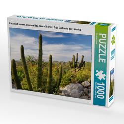 CALVENDO Puzzle Cactus at sunset, Ventana Bay, Sea of Cortez, Baja California Sur, Mexico 1000 Teile Lege-Größe 64 x 48 cm Foto-Puzzle Bild von Christian Heeb