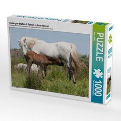 CALVENDO Puzzle Camargue-Stute mit Fohlen in ihrer Heimat 1000 Teile Lege-Größe 64 x 48 cm Foto-Puzzle Bild von Meike Bölts